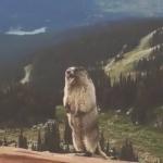Marmot Scream.mp4_snapshot_00.03_[2016.05.26_17.55.45]